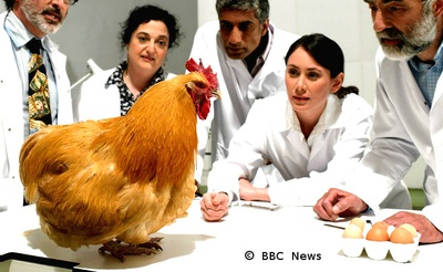 Scientists staring at Chicken and eggs